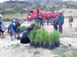 En Pisili impulsan  la reforestación
