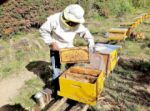 Los productores de miel  se declaran en emergencia