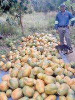 Fruticultura crece en D-7  aunque faltan incentivos