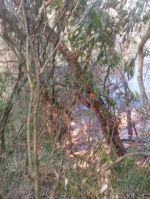 Un incendio en la comunidad Monte Mayor persiste desde el 17 de septiembre