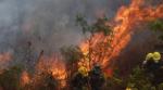 Gobierno cuantifica 1,6 millones de hectáreas afectadas por incendios