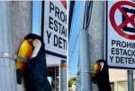 Indignación por foto de tucán atado a un poste; Ministerio pide investigar