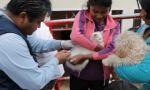 Campaña de vacunación contra la rabia comienza este domingo en Sucre
