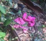 Tras cinco días, hallan a niña Abigaíl sin vida en Cochabamba