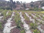 Granizada se ensaña con comunarios de Yotala y Villa Charcas
