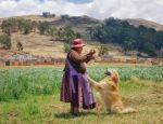 """""""Yoshiro"""", el can antidroga que disfruta su jubilación a orillas del lago Titicaca"""