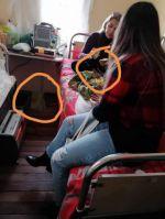 Bolivia Verifica: Imagen de Áñez comiendo en la cárcel es un fotomontaje