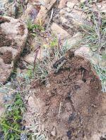 Plaga de gusanos se ensañó con agricultores de Padilla