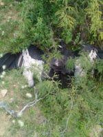 Presto: Hallan un segundo cóndor muerto en la comunidad de Tomoroco
