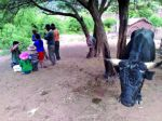 El Senasag detecta un brote de rabia bovina en el Distrito 8 de Sucre