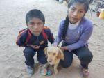 """""""Cualsito"""", el can que perdió a su amo en un accidente, migra a Uyuni con su nueva familia"""