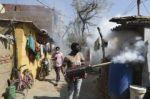 India investiga su primera muerte por gripe aviar