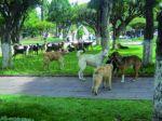 Sucre: Canes callejeros atacan y deambulan sobre todo en cinco zonas