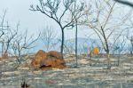 Incendios en la Amazonía permanecen activos