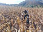 La sequía azota al departamento; seis municipios, zona de desastre