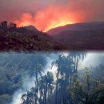 El Palmar: Incendio se descontrola y esperan ayuda aérea para hoy