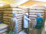Bolivia exportó 650 toneladas de orégano en plena pandemia