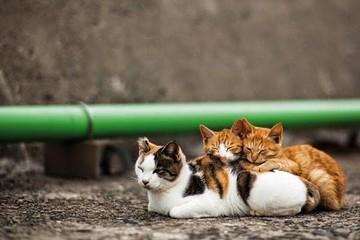 """""""La Isla de los Gatos"""""""