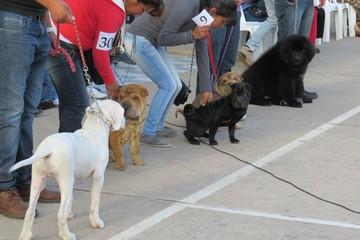Exhibieron un centenar de canes de raza