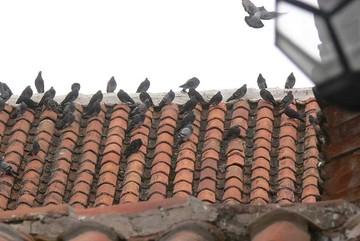 Palomas provocan daños  en la Casa de la Libertad