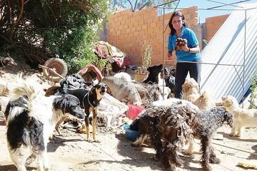La proliferación de perros callejeros no cesa en Sucre