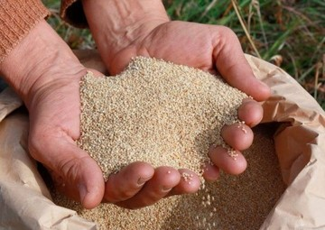 Regalarán al Papa imagen de la Virgen hecha con granos de quinua