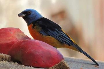 observador de pájaros