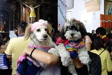 Perros recibieron cariño en la fiesta de San Roque
