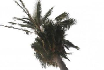 Un rayo cae en pleno centro de Sucre y arde una palmera