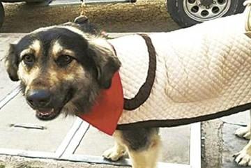 Saxoman estrena canción dedicada al perro Petardo que acompañó a los potosinos