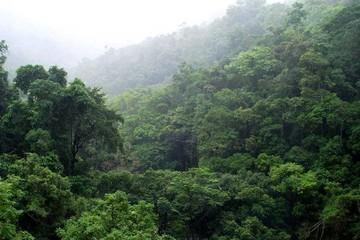 Bolivia demandará defensa personal de la Madre Tierra