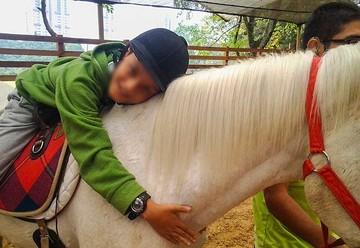 Equinoterapia, caballos que sanan