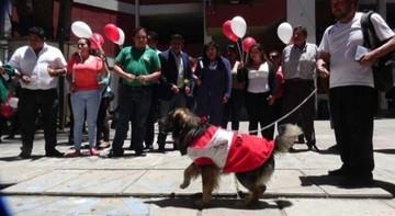 Perro Petardo hace campaña por el No en Cochabamba