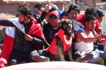 """Asambleístas de Potosí distinguen al can """"Petardo"""" como ícono de su región"""