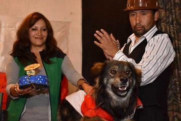 """El perro Petardo, en una """"gira nacional"""" por el No"""