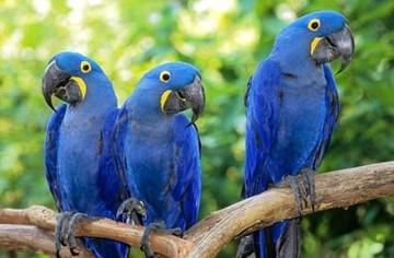 El Gobierno anuncia la repatriación de 60 parabas azules desde EEUU
