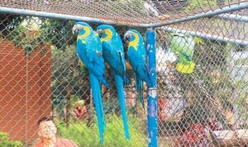 Santa Cruz: Zoológico será bosque urbano