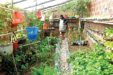 Los huertos urbanos en Sucre empiezan a ser autosostenibles