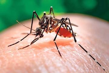 Chuquisaca: Reportan 19  casos sospechosos de zika