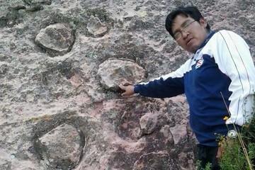 Profesor reporta  hallazgo único de fósiles en Potolo