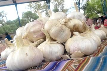 Producción de ajo en Tupiza: Del cultivo local a los mercados del país