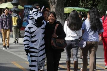 Cebras en campaña por el Día de la Mujer