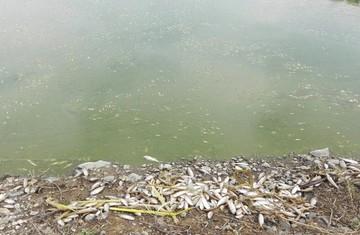 Miles de peces mueren en la laguna Alalay de Cochabamba y comienza investigación