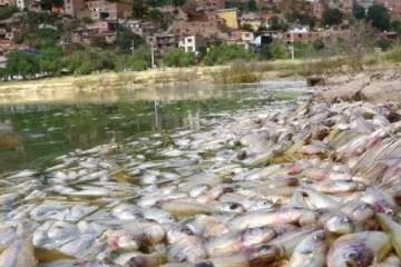Se muere de a poco la laguna Alalay