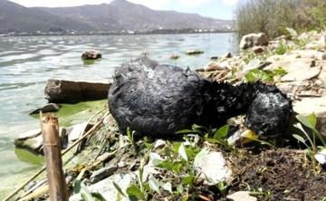 Una docena de patos y aves aparecen muertos y agonizantes en la laguna Alalay