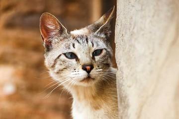 Contagio de toxoplasmosis: gatos, no tan culpables