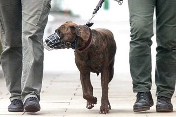 No se aplica ley nacional ni municipal sobre canes