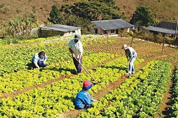 Invertirán $us 40 millones en agricultura