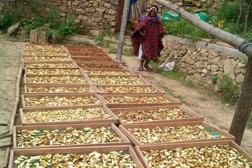 """Rumi Tanpu"" trae al mercado hongos para suplir la carne animal por vegetal"