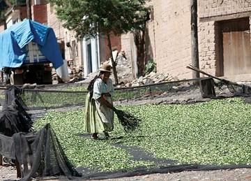 """Ley """"transnacional"""" antidrogas  de EEUU preocupa a cocaleros  de Bolivia, Colombia y Perú"""